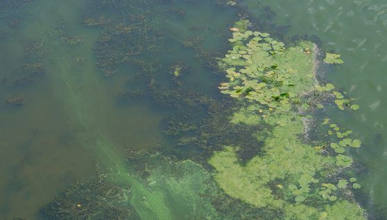 Nuclear technology to track sources of water pollution