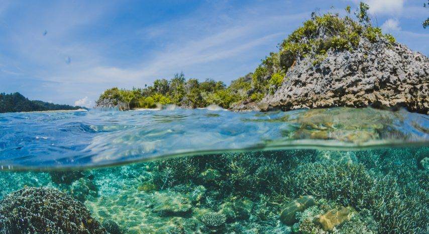 Nuclear technology can help mitigate ocean acidification caused by climate change