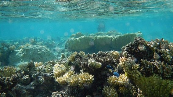 While protecting from storms and nourishing ground fish, the coastal ecosystems are Earth's most effective systems to capture and store carbon from the atmosphere. (Photo: P. Swarzenski/IAEA)